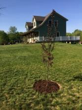 Grandmas tree